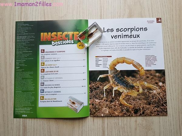 enfant-nature-collections-mineraux-insectes-bestioles