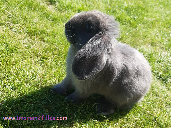 notre lapine Réglisse
