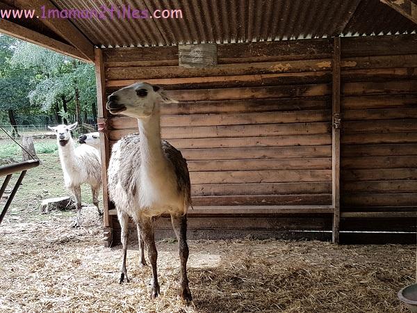 ferme monde carentoir sorties familiales-enfants-lama