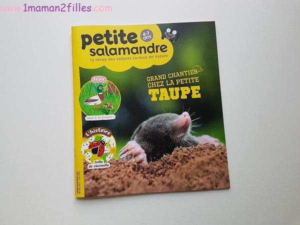 nature-salamandre-bricolage-palette-insectes