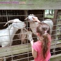 #Bretagne #38 L'enfant et la nature à la ferme du monde de Carentoir