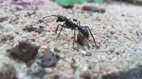 musee-phasmes-fourmis-abeilles