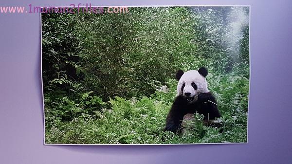 posterlounge-décoration enfants poster lapin panda