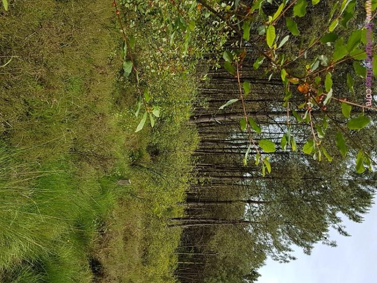 tourbiere-nature-enfant-visite-papillons-drosera