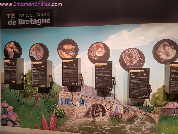 chauves-souris-maison-bretagne-morbihan-famille
