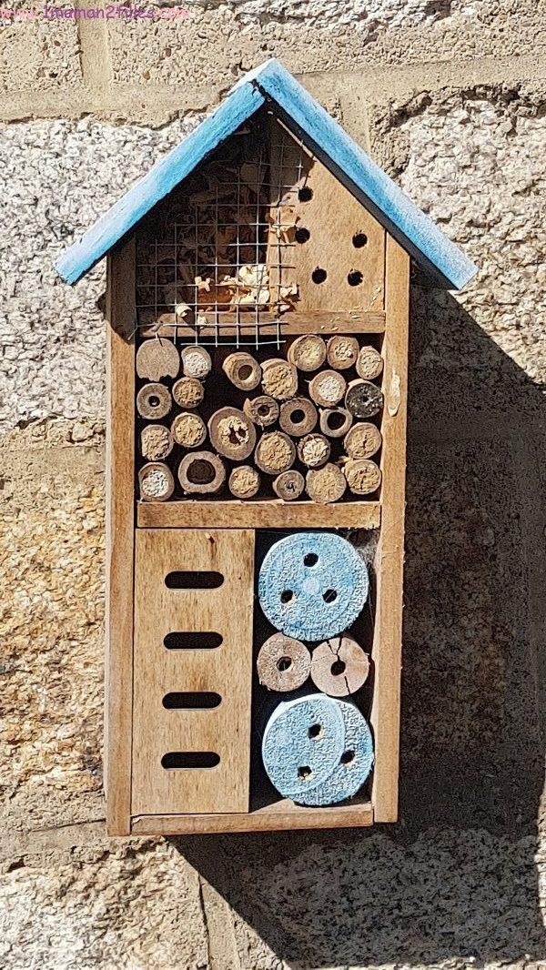 nature-enfant-observe-abeilles-fleurs